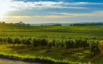 French Vineyards